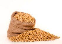 बियाणे अनुदान 2021 अर्ज सुरू Seeds Subsidy